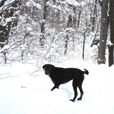 The Fair-Weather Dog Walker