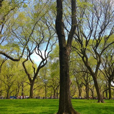 A Weekend Walk Through Central Park