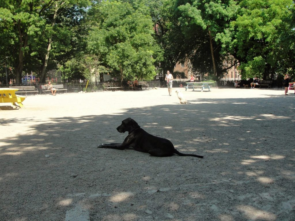 new york city dogs, east village dog run, tompkins square park,