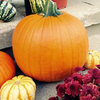 Taste and Sip with Pumpkin This Fall