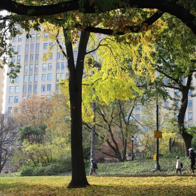 Best Places for Autumn Walks in NYC