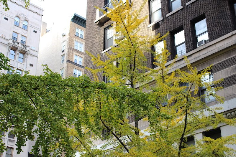 Share a studio apartment in NYC.