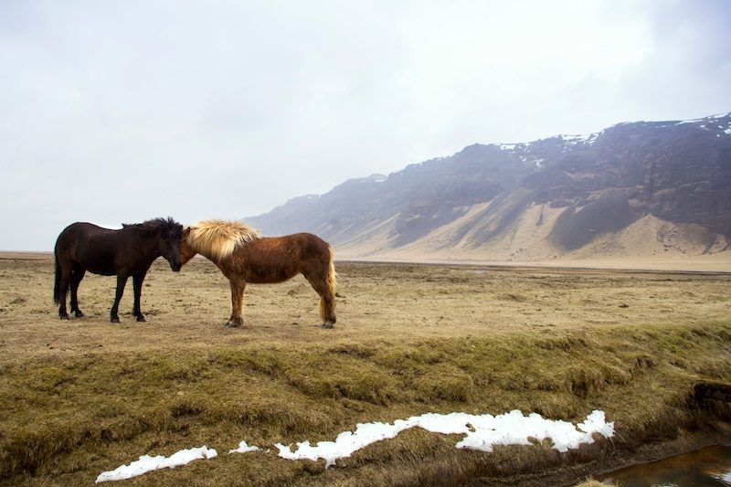 Iceland – a great vacation from nyc