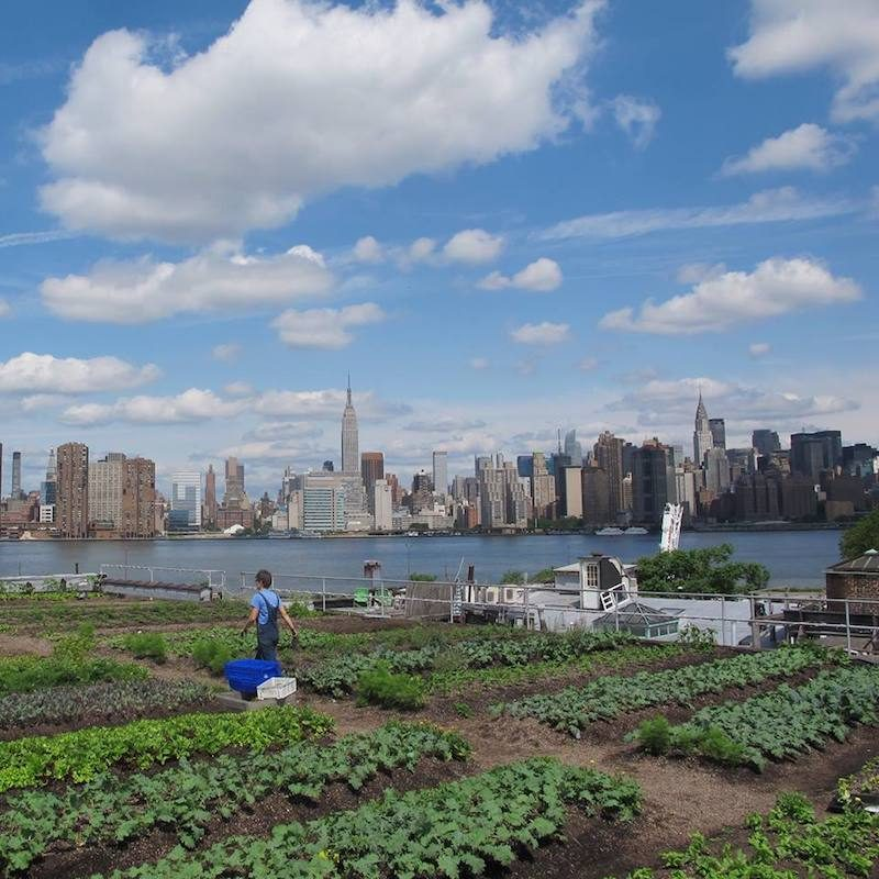 Urban farms in NYC