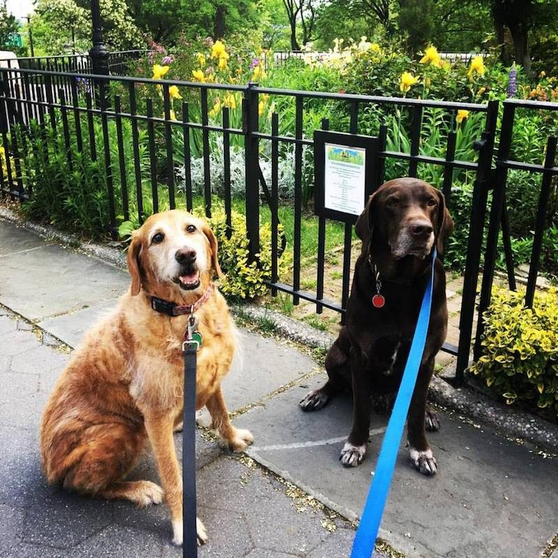 best dog breeds for new york